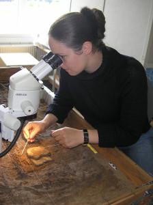 Konservator Anne-Kathrine Kjerulff arbejder med afrensning af præparatet under mikroskop.
