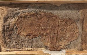 Hammerum-pigens grav fritlagt til overfladen af tekstilerne og frisuren.