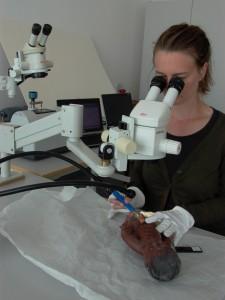 Prøveudtagning under mikroskop til FTIR-analyse